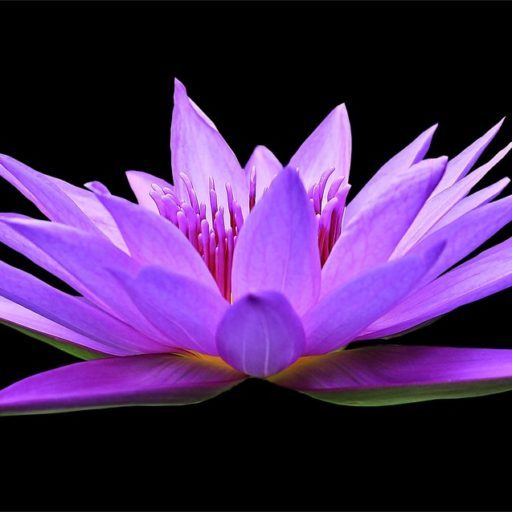 http://www.sowerofthesoulministry.com/wp-content/uploads/2017/02/cropped-water-lily-1592771_1280-1.jpg